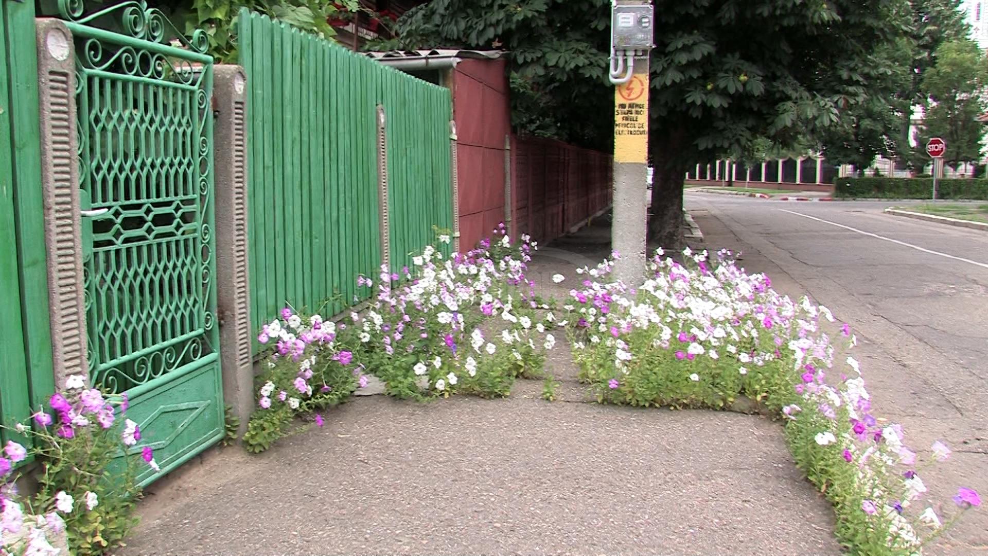 Imagini pentru trotuare , flori